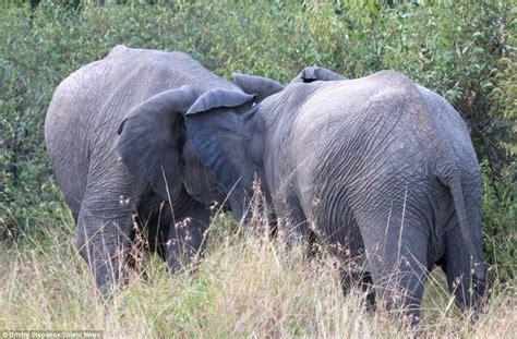 Elephant Matting by How Do Elephants Mate