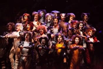 Kittens Giveaway Brisbane - cats the musical brisbane season reviews