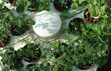 hydroponic herb garden systems  super cool kits