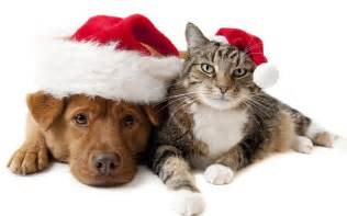 Christmas wallpaper with a cat and a dog wearing christmas hats hd cat