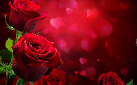 themes beautiful rose bordowe r 243 że