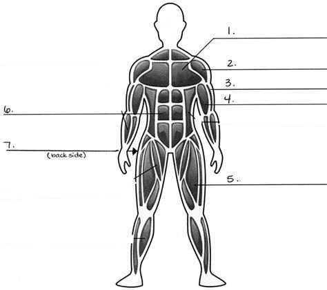 muscular system diagram muscular system blank diagram unlabeled diagram