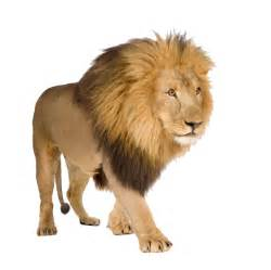 images free png images free lions