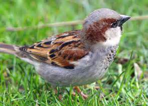 the wild life review the sparrow