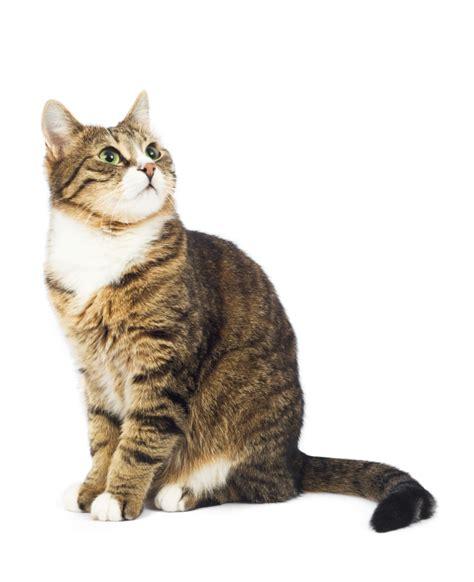 Cha T le stress chez le chat comportement du chat education