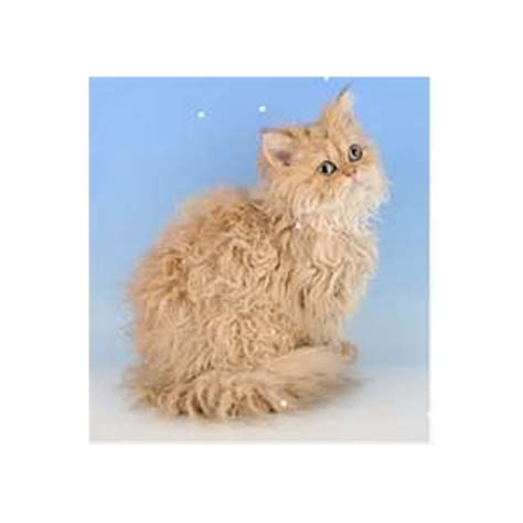 Cat Fur Mat Remover by Matted Pet Hair Remover For Cats
