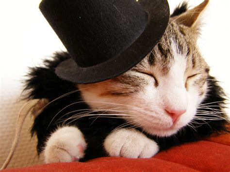 cat in hat cat in a hat mooandflo the random wittering of flo