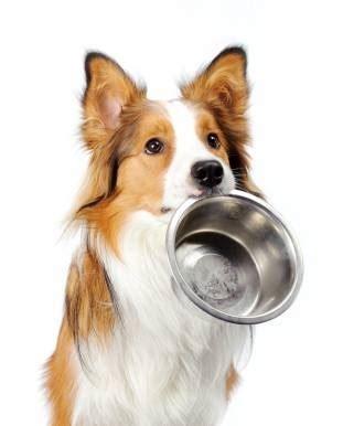 alimento cani alimenti cani cibo per cani