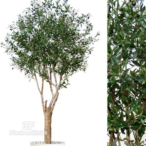 olivo in vaso prezzi piante di ulivo terreno valore ulivo mitula