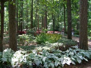 more pictures from garvan woodland gardens parks
