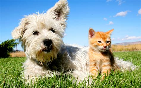 are cats or dogs smarter are dogs smarter than cats