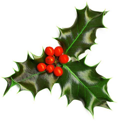 christmas plants holly английский в ясенево