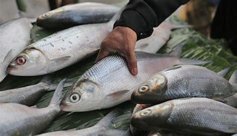 Aneka Olahan Ikan Bandeng pemanfaatan limbah ikan bandeng makanan olahan berbahan ikan