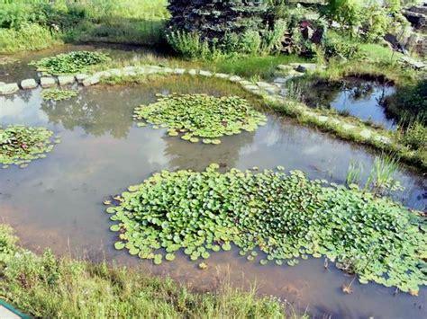 Klares Wasser Im Teich 1420 by Teichreinigung Mit Teichfilter Teich Wassertechnik