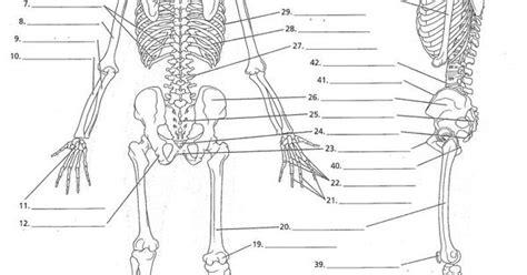 anatomy labeling worksheet anatomy labeling worksheets search i anatomy anatomy worksheets