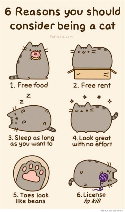 6 reasons you should consider being a cat weknowmemes