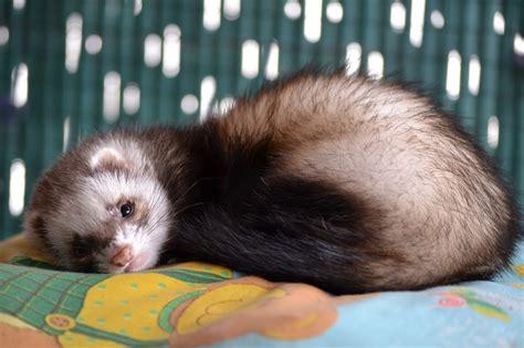 animali da casa animali piccoli da tenere in casa 5 idee per voi