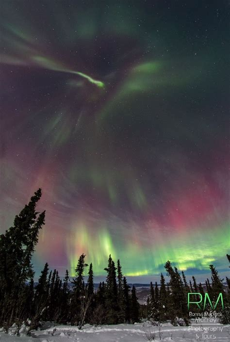 best to view northern lights in alaska 2148 best borealis images on