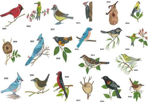 birds of virginia chart pictures to pin on