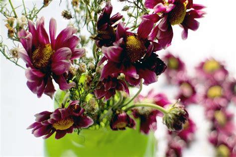 seccare fiori essiccare fiori fiori secchi come essicare i fiori