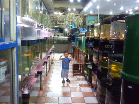 Toko Pakan Ikan Hias Jogja toko ikan hias di batam info