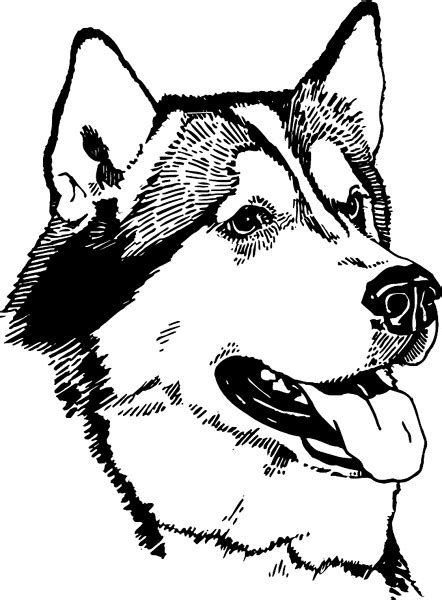 coloring pages of husky puppies signspecialist com general decals alaskan husky dog
