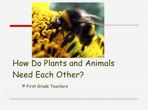 lesson 3 3 how do plants and animals need each other