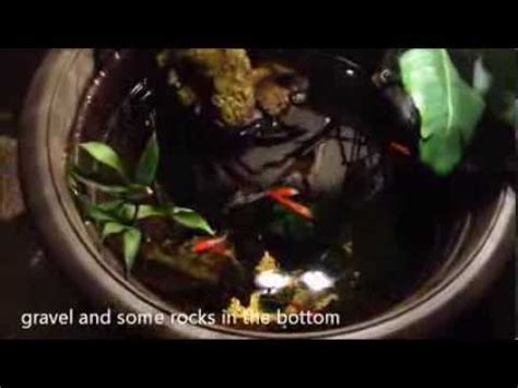 cool diy small indoor pond