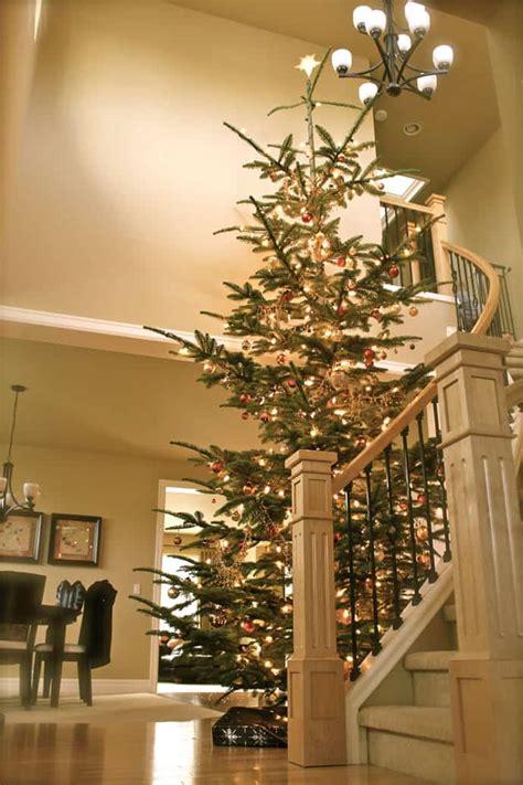 tall skinny christmas tree