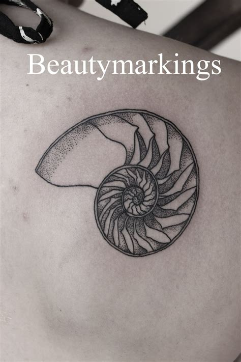 shell tattoo designs beautymarkingsart delicate nautilus shell for