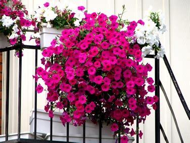 idee per balconi fioriti balconi fioriti benvenuta primavera il verde