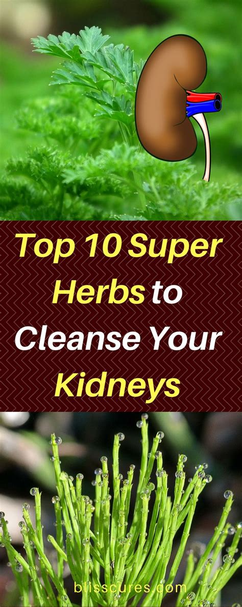 Signs You Need To Detox Your Kidney by Best 25 Kidney Stones Ideas On Kidney
