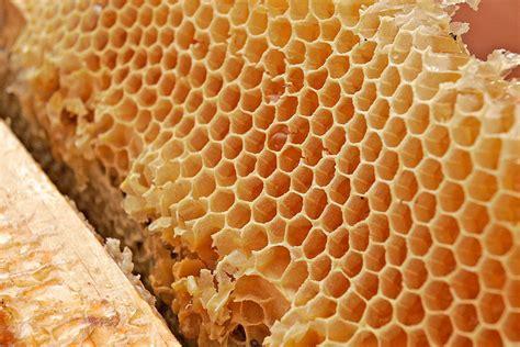 Sarang Madu file honey comb02 jpg wikimedia commons
