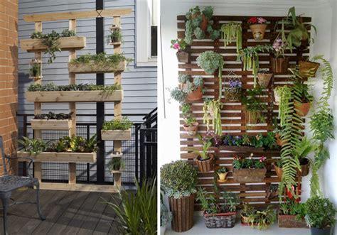 piante da vaso esterne foto pareti esterne con piante di rossella cristofaro