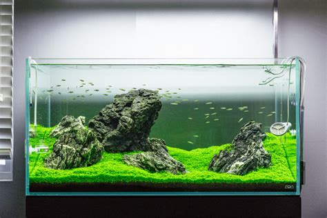 guide  planted aquarium aquascaping iwagumi glass aqua