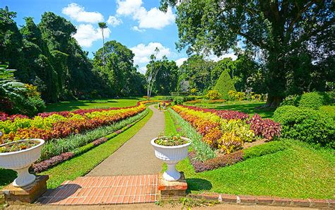 50 Photos Of Royal Botanical Gardens Sri Lanka Places Royal Botanic Garden