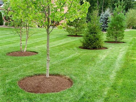 landscaping toronto landscape maintenance in toronto landscaping services