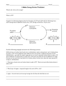 Energy Review Worksheet by Cell Processes Worksheet Worksheets Tutsstar Thousands