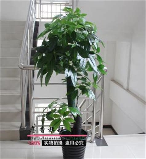 artificial plants for living room freeshipping with pot total 155cm artificial plants bonsai