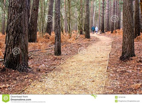 a walk in the woods audiobook free a walk in the woods royalty free stock photos image