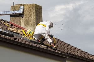 Mittel Gegen Wespen Im Dach by Wespenspray Wespenschaum Mittel Gegen Wespen
