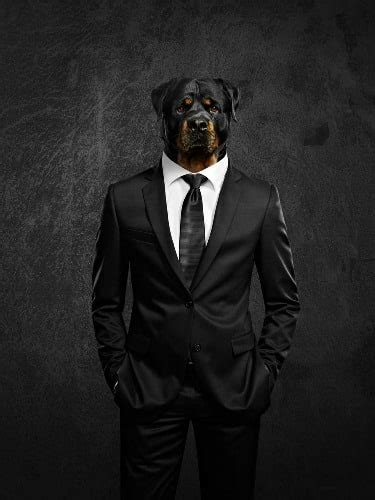 puppy in a suit a guide to declaring chapter 11 bankruptcy