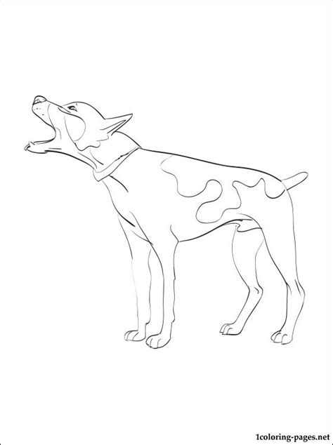 rat terrier coloring page rat terrier coloring page coloring pages