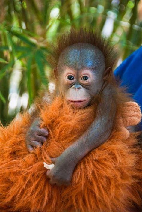 Qiara Soo Orange Hair Care births dr who and a monkey on