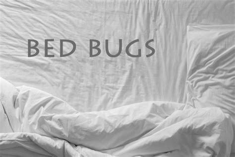 Can T Get Rid Of Bed Bugs by How Can I Get Rid Of Bed Bugs By Myself