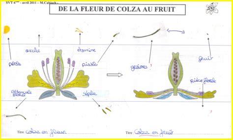 Sch 233 Ma D Une Fleur Cm1