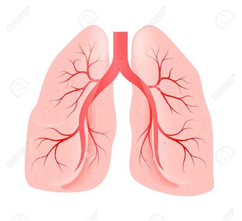 clipart lungs unhealthy lungs clipart