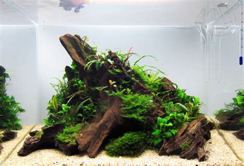 layout aquascape layout forms in aquascaping aquascaping wiki