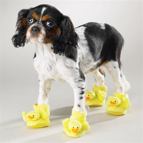slippers for dogs casual canine slippers duckie baxterboo