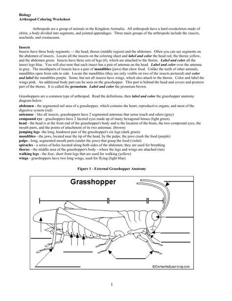 arthropod coloring page arthropods worksheet wiildcreative